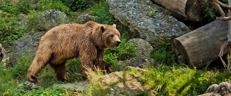 Zoos & Wildparks - Tagesausflüge im Salzburger Land